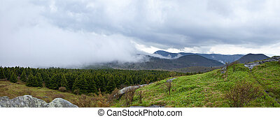 foggy weather forest panorama