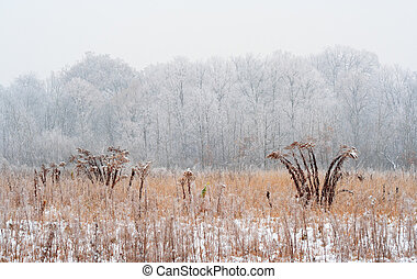 Foggy winter meadow