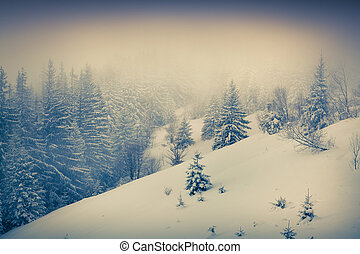 Foggy winter morning in the mountain forest.