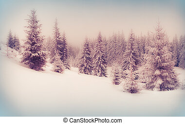 Foggy winter scene in the mountain forest.