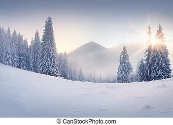 Foggy winter sunrise in the mountains