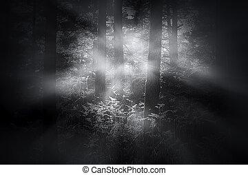 Foggy woods at dawn