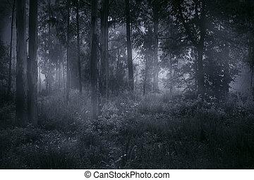 Foggy woods at dusk or dawn