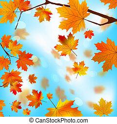 fogli azzurro, albero, eps, contro, autunno, 8, acero