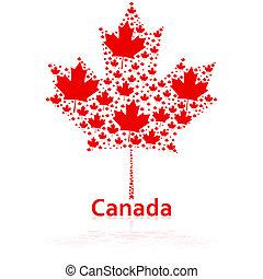 foglia, acero, canadese