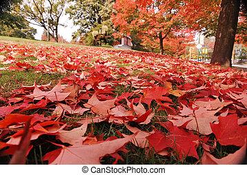 Autunno ottobre foglia acero foglia autunno foto for Foglia acero