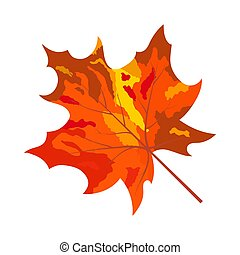foglia autunno, acero