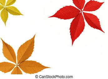 foglia autunno, bordo