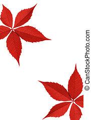 foglia autunno, bordo, rosso