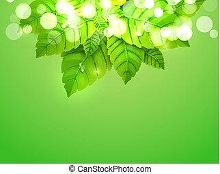foglia, freshdesign, carta da parati, pattern., menta piperita, sfondo verde, fresco, organico, menta