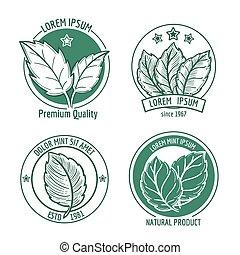foglia, icone, mentolo, etichette, vettore, logotipo, menta, o, menta verde