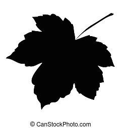 foglia, immagine, isolato, illustrazione, fondo., vettore, silhouette, bianco, acero
