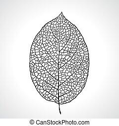 foglia, isolated., macro, illustrazione, vettore, nero, naturale