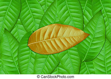 foglia marrone, verde