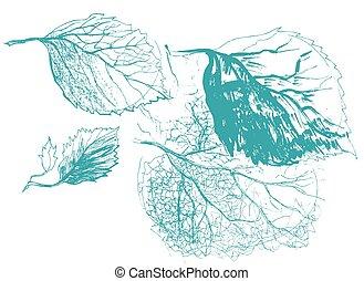foglia, natura, defoliation, autunno, albero., betulla