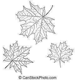 foglia, natura, isolato, simbolo, vettore, monocromatico, acero, contorno