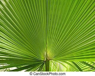foglia palma