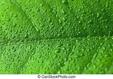 foglia, sopra, esso, acqua, verde, gocce