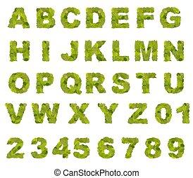 foglia verde, alfabeto