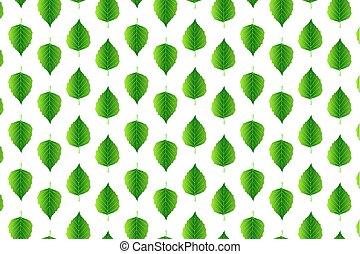 foglia verde, betulla, bianco, fondo