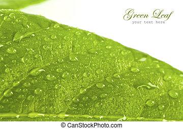 foglia verde, con, gocce, di, acqua, bianco, fondo