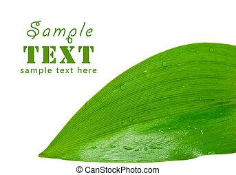 foglia verde, con, gocce, di, rugiada, su, uno, sfondo bianco