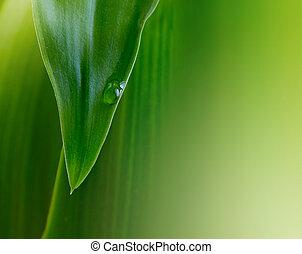 foglia verde, con, goccia acqua
