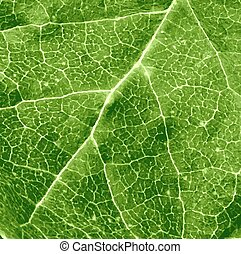 foglia, verde