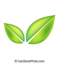 foglia verde, isolato, bianco, fondo