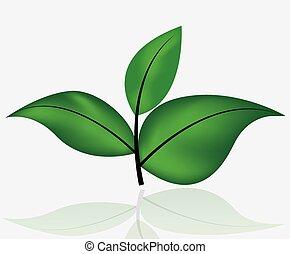 foglia verde, isolato, bianco
