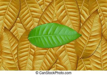 foglia verde, marrone