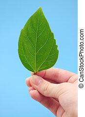 foglia verde, tenendo mano