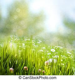 fogliame primaverile, con, margherita, fiori, bellezza, naturale, sfondi