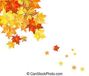 foglie, acero, autunno