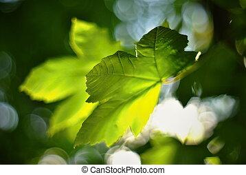 foglie, acero, dorato, sera