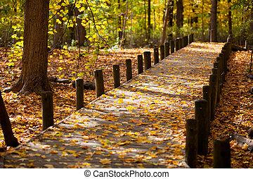foglie, acero, passerella
