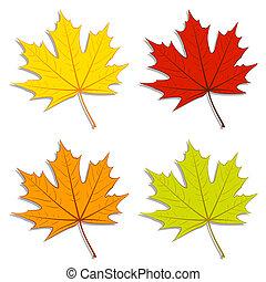 foglie, acero