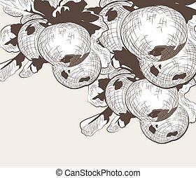 foglie, albero frutta, mela, ramo