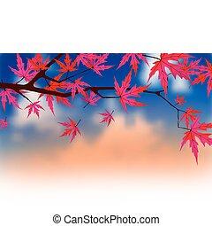 foglie, autunnale, acero