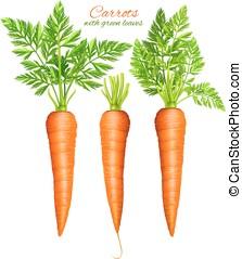 foglie, carote