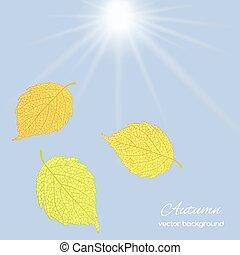foglie, cielo, contro