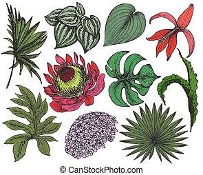 foglie, collezione, mano, tropicale, vettore, disegnato, fiori
