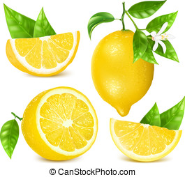 foglie, fresco, blossom., limoni