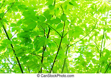foglie, in, luce sole