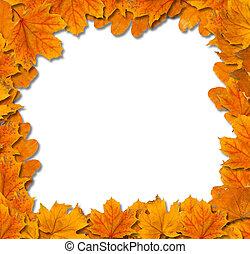 foglie, isolato, autunno, luminoso, fondo, bianco