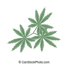 foglie, marijuana, canapa, fondo, bianco, o