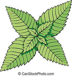 foglie, menta