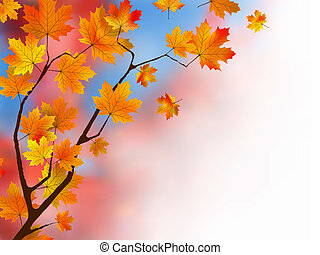 foglie, o, sfondo rosso, concept., acero