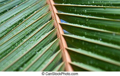 foglie, palma