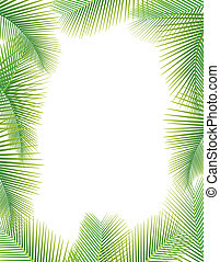 foglie palmo, albero, bianco